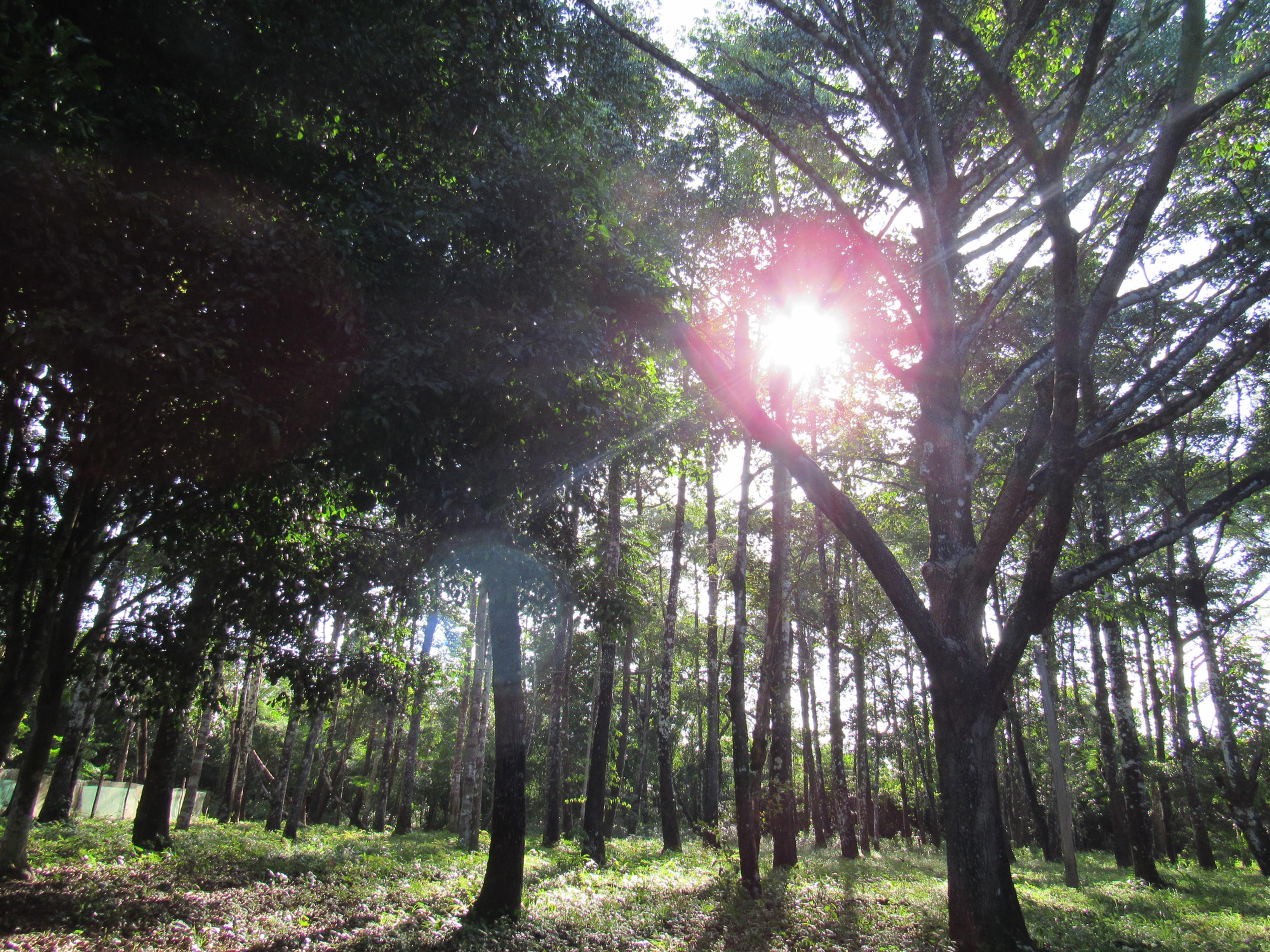 Visita à Fazenda Bacuri