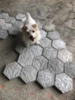 Louie and Diatom Pavers.JPG
