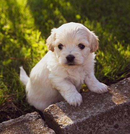 puppy-4234435_640_edited.jpg