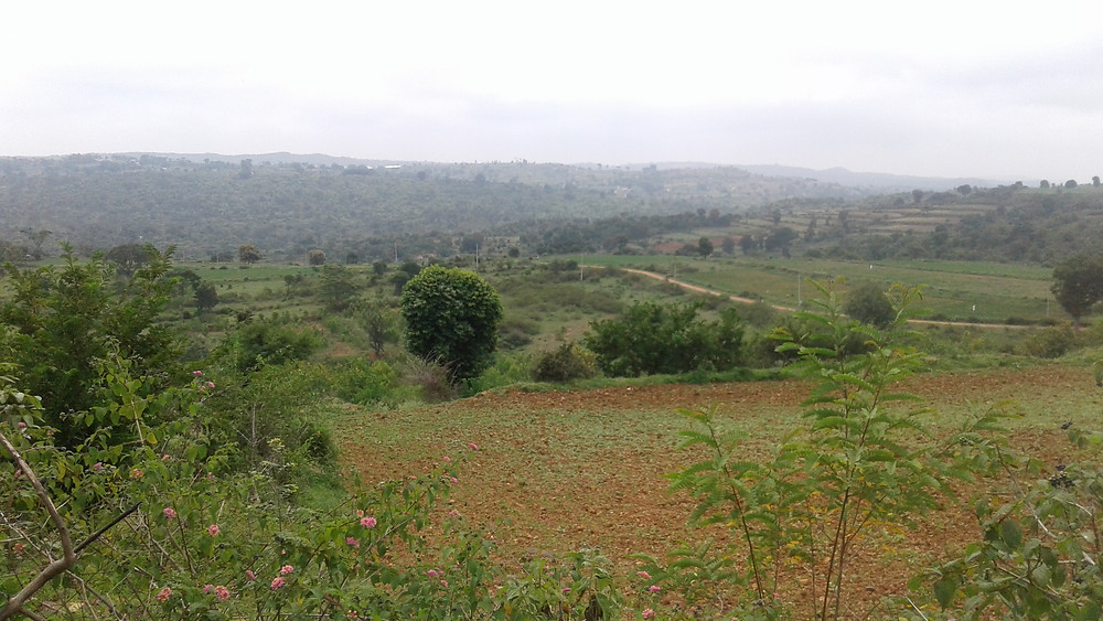 The view from Kempa's land, Udinapalya