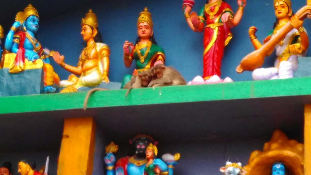 See if you can spot the monkey gods having a divine cuddle :)