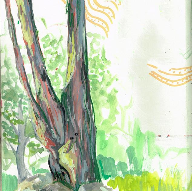 Tree at Charles E Doyle Park