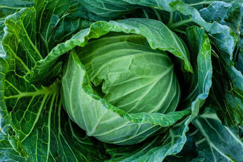 closeup-nature-view-of-Cabbage-in-garden