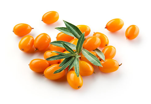 Sea-buckthorn-isolated-on-the-white.-614