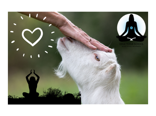 Goat Yoga for Halloween!