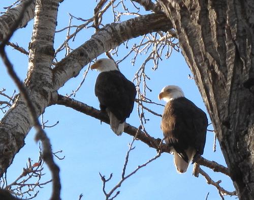 20 eagles.jpg