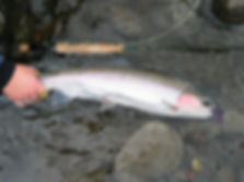 grande ronde guided steelhead fly fishing
