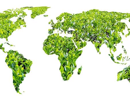 Tea growing regions of India