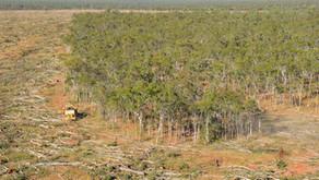 Trees Make Rain, Forest Floors Store Water - Australia's Deforestation effects 🎥