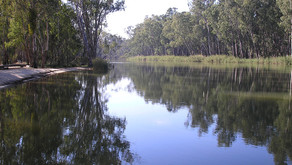 Another Man-Made Tragedy: Australia's Murray Darling River 🎥