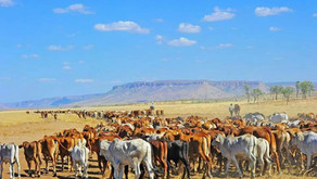Cattle Farming - We NEED to Change Eating Conventionally Farmed Red Meat & Go Regenerative!