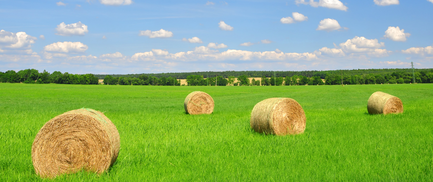 straw bale in a lush green field and blue sky_edited.jpg