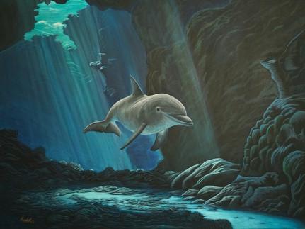 dolphin2.jpg