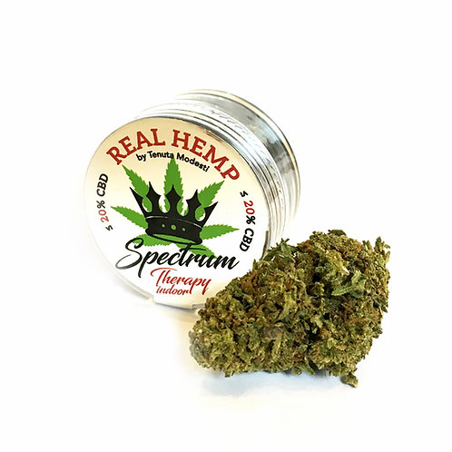 REAL HEMP SPECTRUM Therapy Indoor - Infiorescenze - 1g • CBD 20%