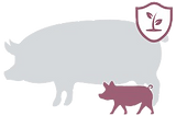 MAXI-PROFIT-PIG.png