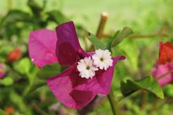 Foliage Pink 1