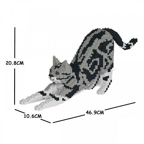American Shorthair Cat 04S  (需訂貨)