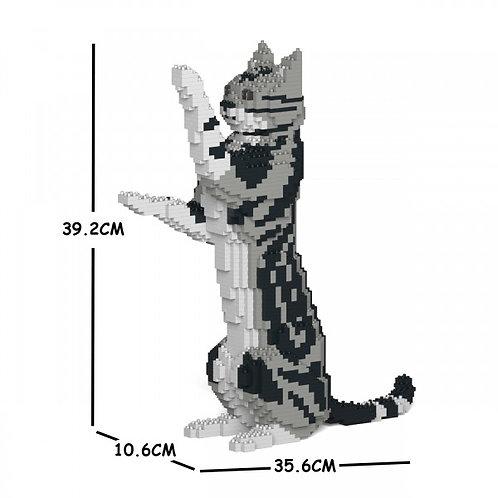 American Shorthair Cat 05S  (需訂貨)