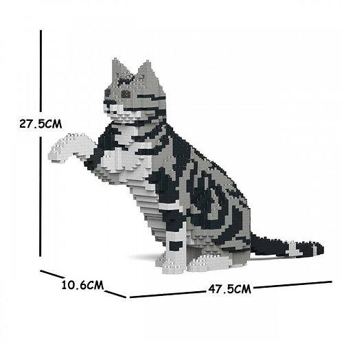 American Shorthair Cat 03S  (需訂貨)