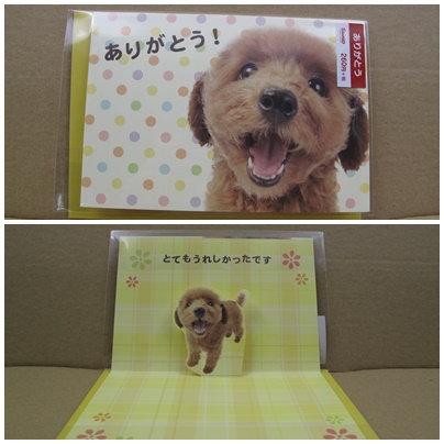 D00593 貴婦犬 Thank you咭