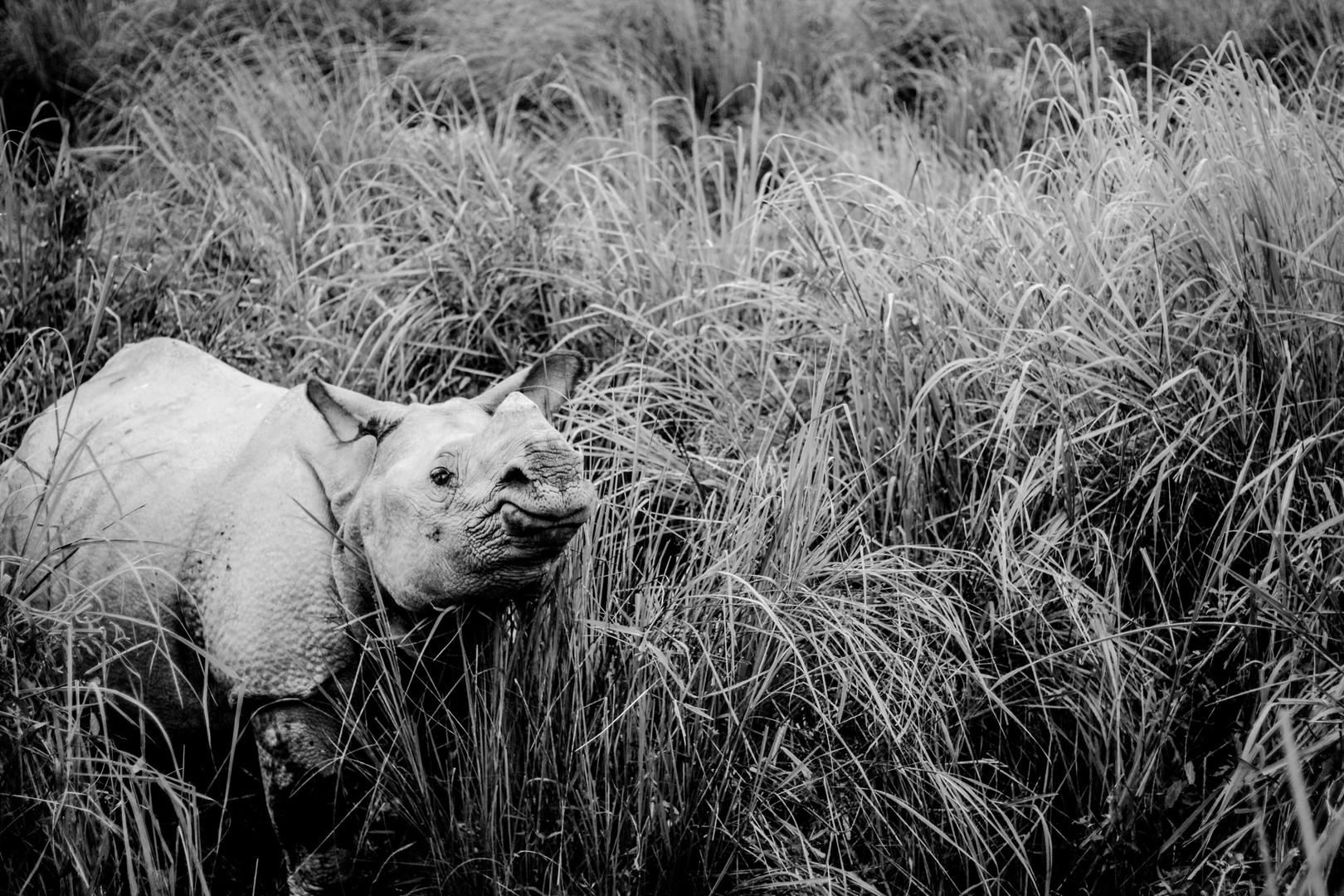 Curious | Assam, 2017