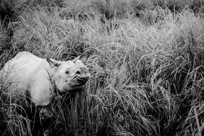 Curious   Assam, 2017
