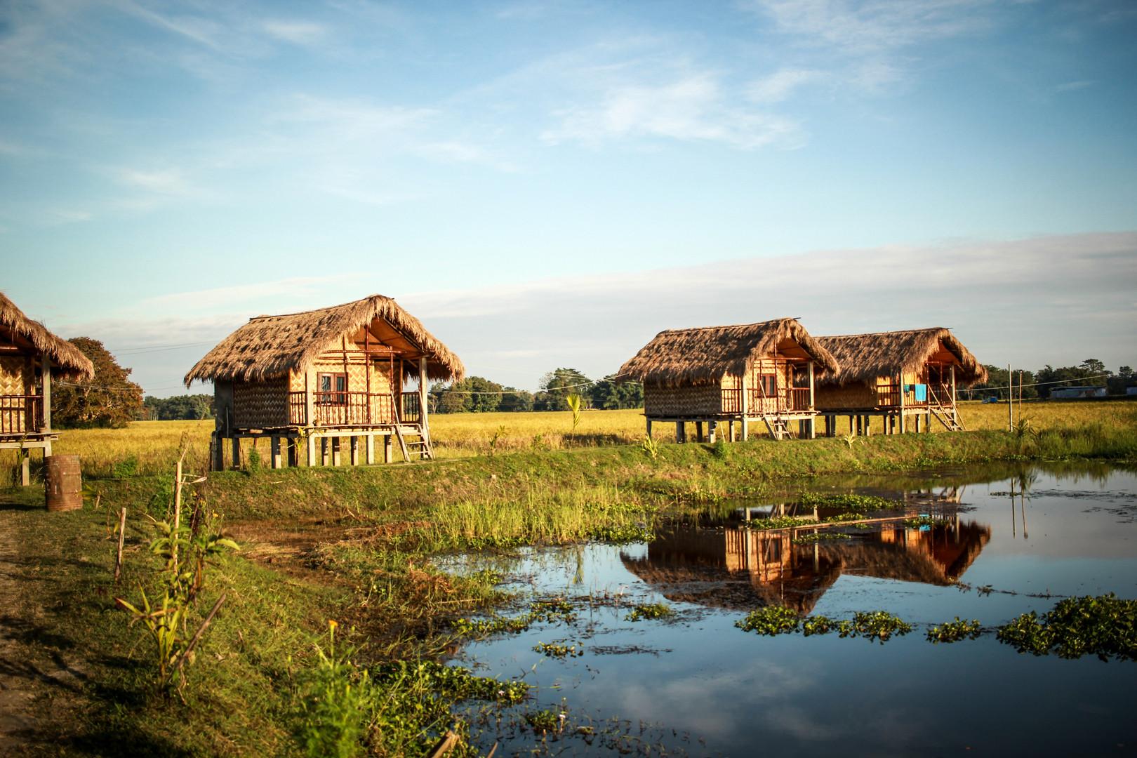 Bamboo | Assam, 2017