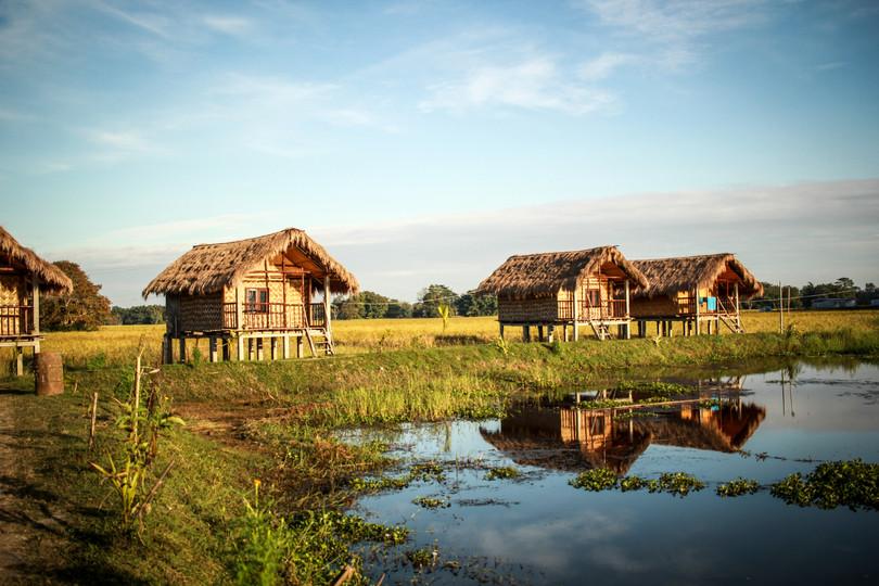 Bamboo   Assam, 2017