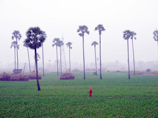 Red Sari | Kerala, India, 2011