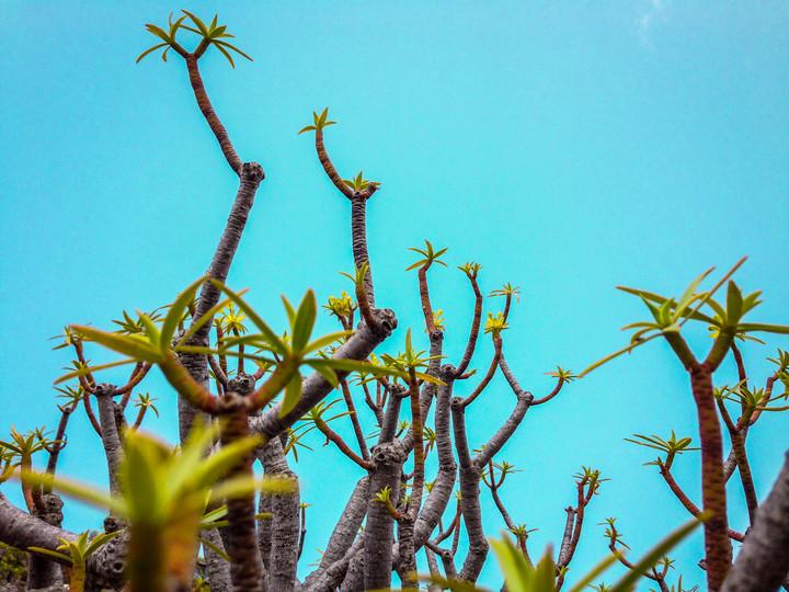 Azul | La Gomera