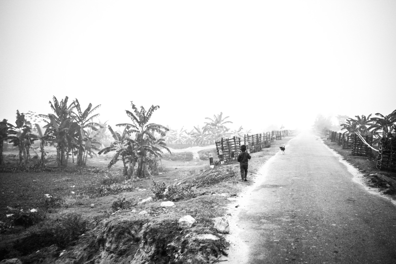 The Road to | Assam, 2017