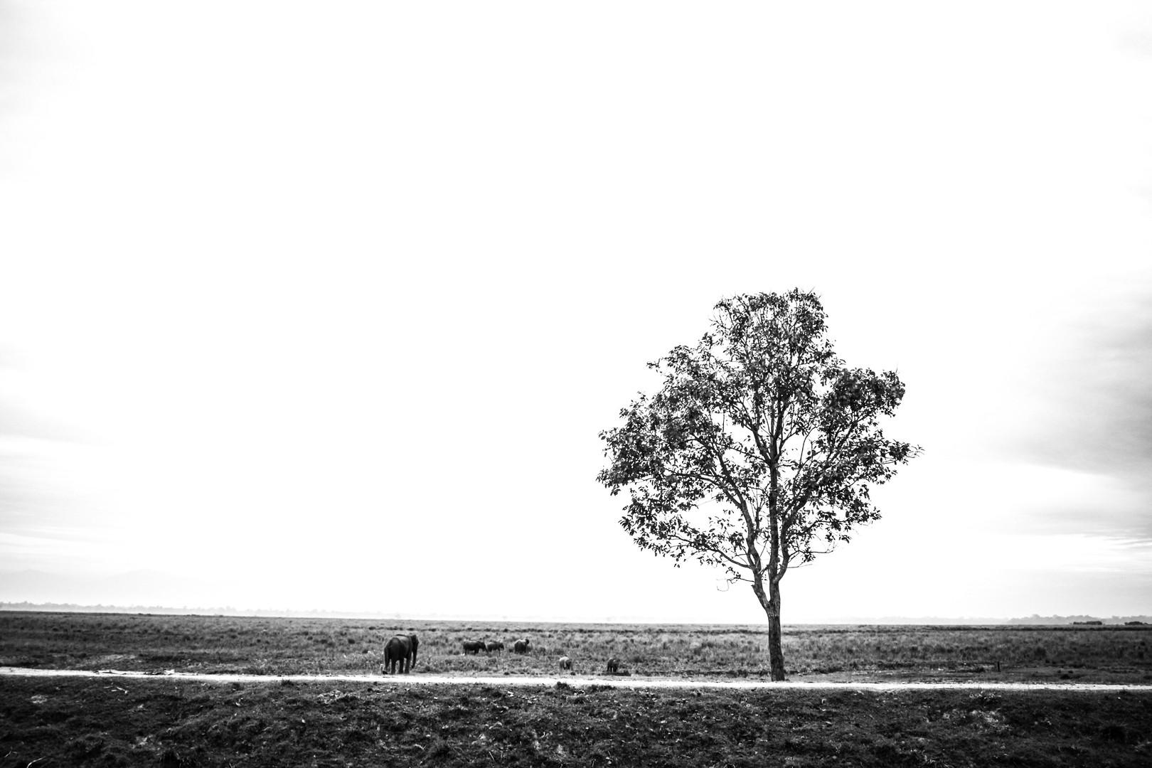 Plains | Assam, 2017