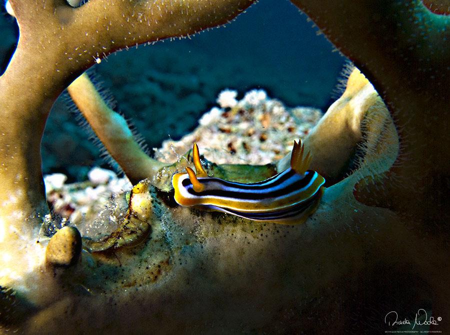 nudi tra corallo