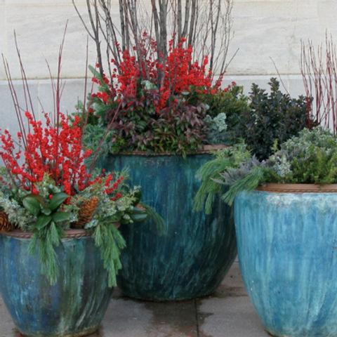 blue-pots-berries-dc-400.jpg