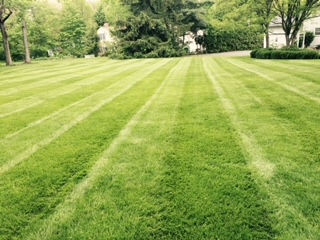 Lawn Pic Flier.jpg