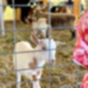 Petting Zoo 2.jpg