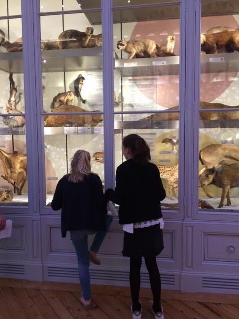 CM2- Museum d'histoires naturelles (4)