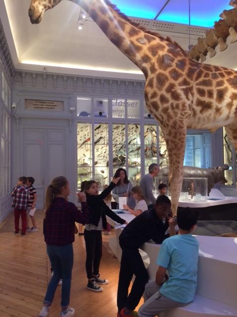 CM2- Museum d'histoires naturelles (3)