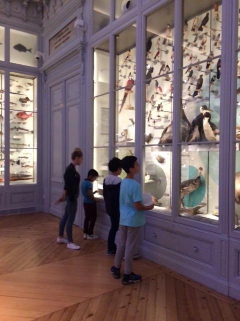CM2- Museum d'histoires naturelles (6)