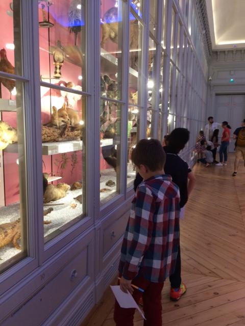 CM2- Museum d'histoires naturelles (5)