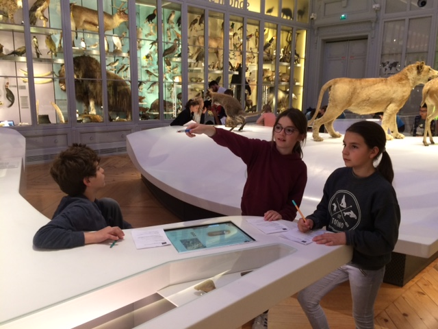 CM2- Museum d'histoires naturelles (7)
