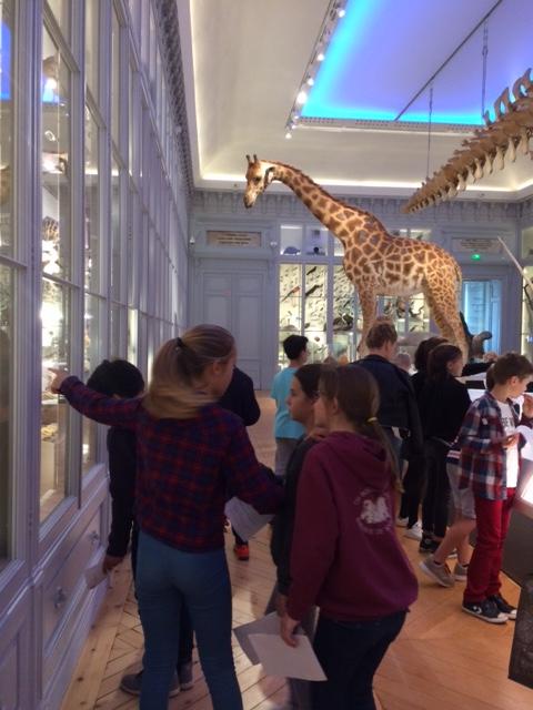 CM2- Museum d'histoires naturelles (2)