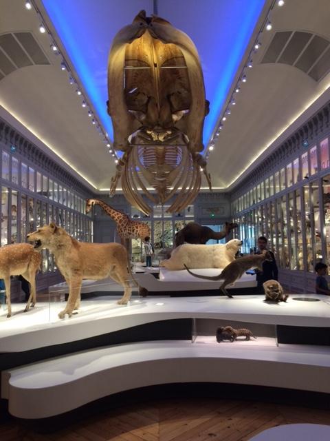 CM2- Museum d'histoires naturelles (1)