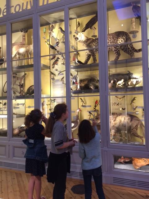 CM2- Museum d'histoires naturelles (8)