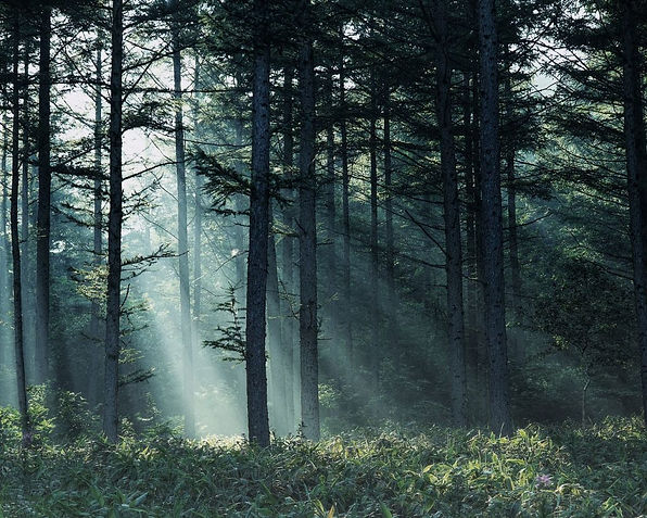 forest-1024x819.jpg