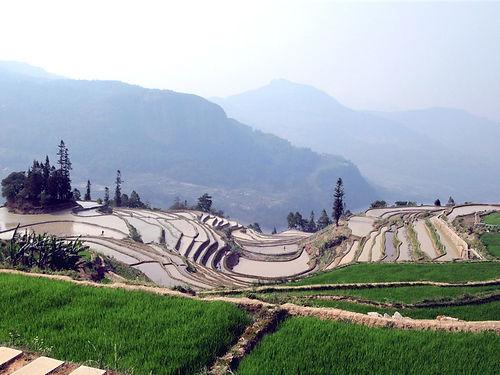 Qingkou_Rice_Terraces_(48653770116).jpg