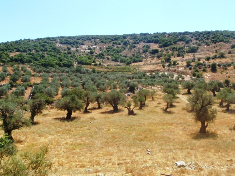 Upper Galilee