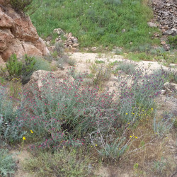 Quarry, Kfar Menachem