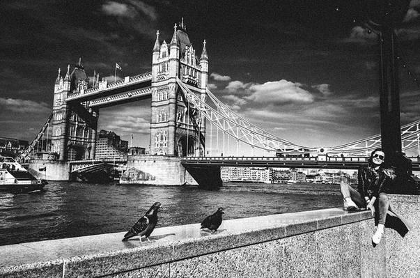 British Pigeons