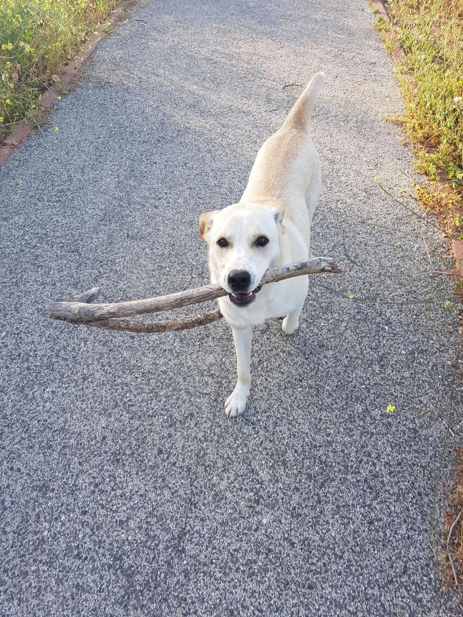 הכלב ברוך - חלק 2